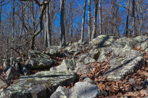 Pine Mountain style boulder field